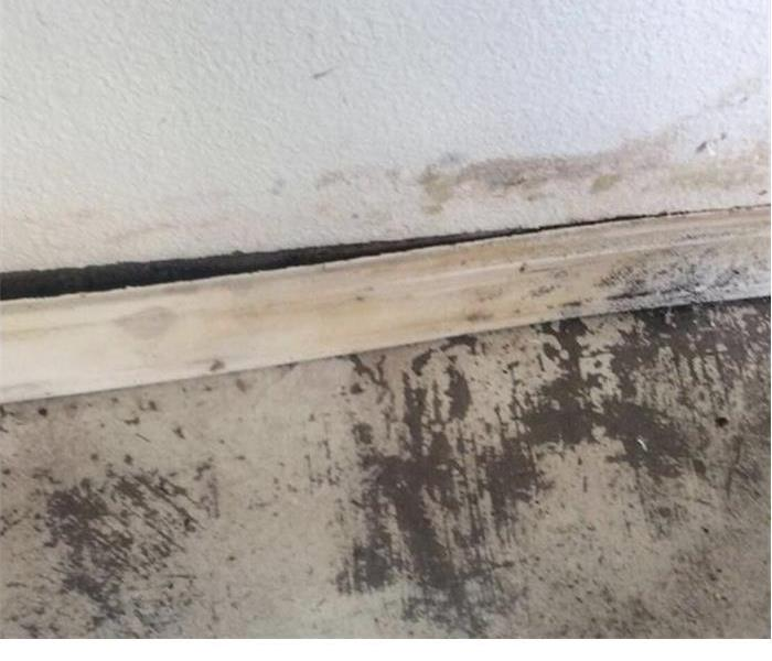 mold in the white walls with a baseboard sticking out